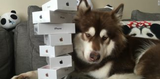 iPhone 7 Dog